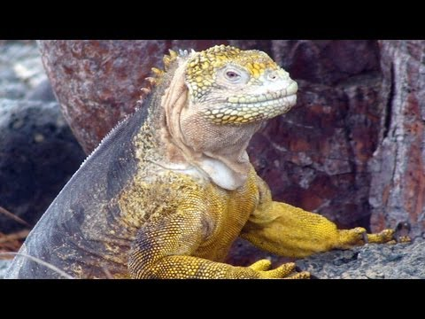 Galapagos Islands Adventure
