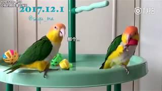 【森77暴打】「森77暴打」#森77暴打,这只鹦鹉看上了人...