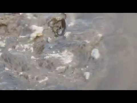 Fish in Blackwater Refuge, Maryland
