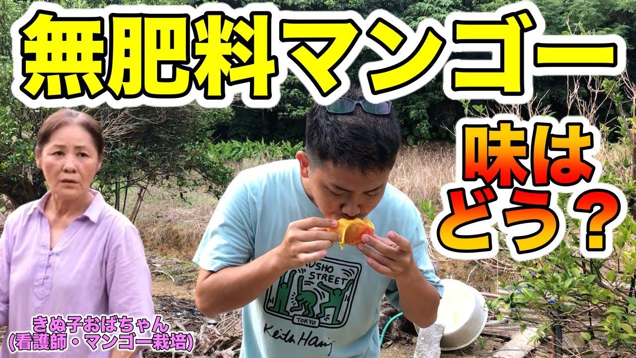 【自然マンゴー】きぬ子おばちゃんの無農薬・無肥料のマンゴー園に遊びに行った【美味しかった】