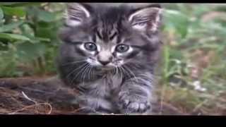 Смотреть приколы с животными онлайн КОШКИ ЗАЖИГАЮТ!