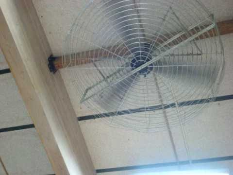 Banvil Ceiling Fan
