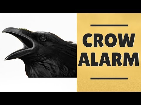 Crow Alarm Sound | Crow Calling