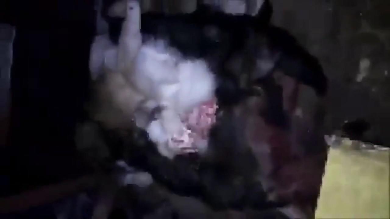 В приюте для животных  обнаружили десятки трупов собак,погибших  от голода.