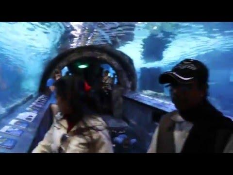 Newport Aquarium, Cincinnati, USA Part 2