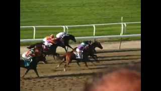 2014 Belmont Stakes Tonalist amature grandstand video Thumbnail