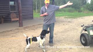 Hunting Dog Training - Developing Steady To Release - Step 3