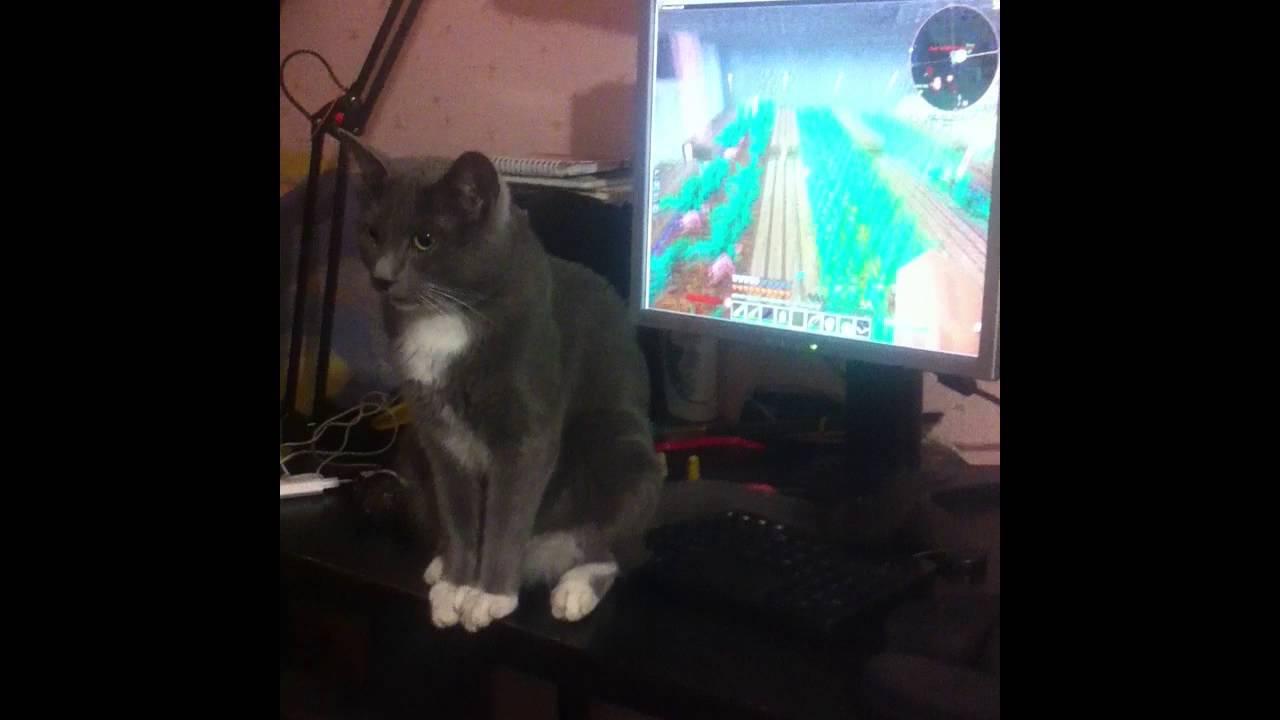 Кот играет в майнкрафт