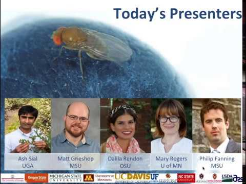 Management of Spotted Wing Drosophila using Organic Strategies