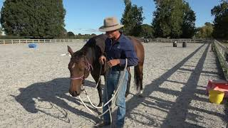 Handy Tips - taking off a halter under a bridle
