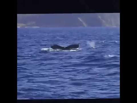 Got a big whale at Hahajima, Ogasawara