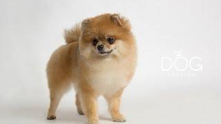 Курсы груминга - обучение стрижке собак Груминг салон Fashion Dog