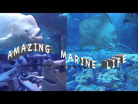 The Lost Chambers Aquarium, Palm The Atlantis, Dubai 4K