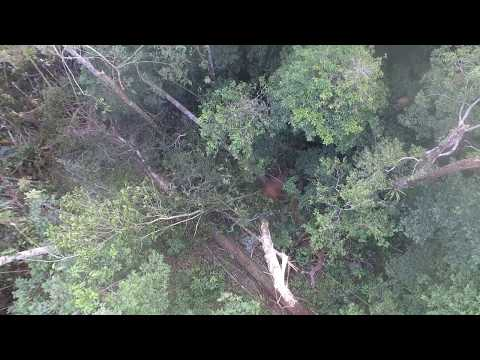 Down tree, captured by drone of UNAP.