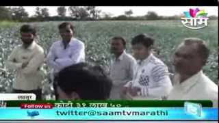 Mohnal Latur Road Village's Tomato And Cabbage Success Story
