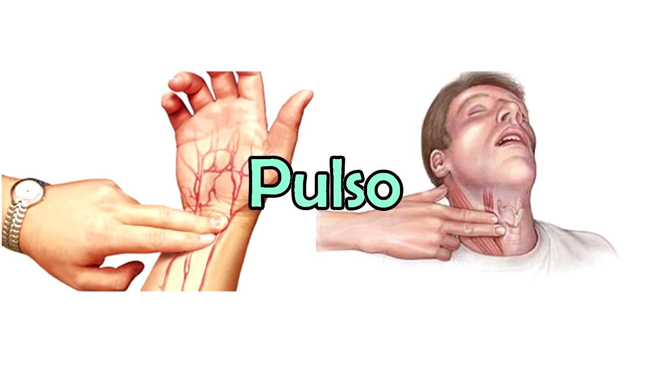 El pulso sanguíneo - YouTube