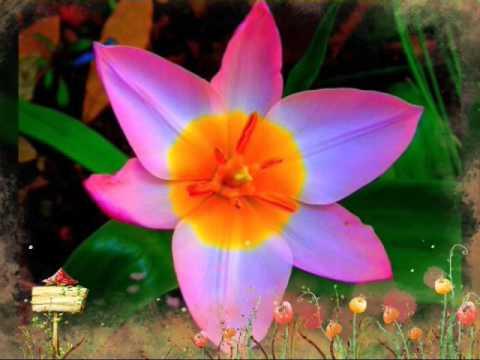 Самые редкие цветы мира!