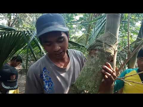 Perburuan Bambu Petuk Patil Lele Bulu Perindu Di  Kampung Rakit
