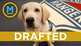 The New York Rangers are training this puppy to become a service dog | Your Morning