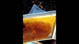 Video Pszczoły,Izolator chmary a kłąb download MP3, 3GP, MP4, WEBM, AVI, FLV Oktober 2017