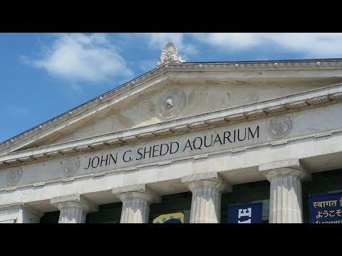 Trip to the Shedd Aquarium, Chicago, IL: Awesome Fish & Turtles + Goodeid Sighting!!