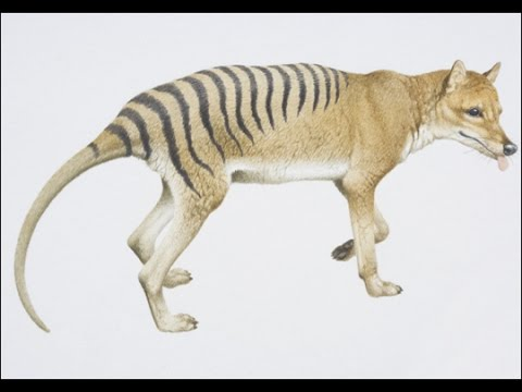 Does anyone have any examples of animals now made extinct by disease?