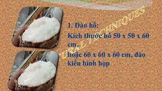 Hướng dẫn kỹ thuật trồng dừa sáp