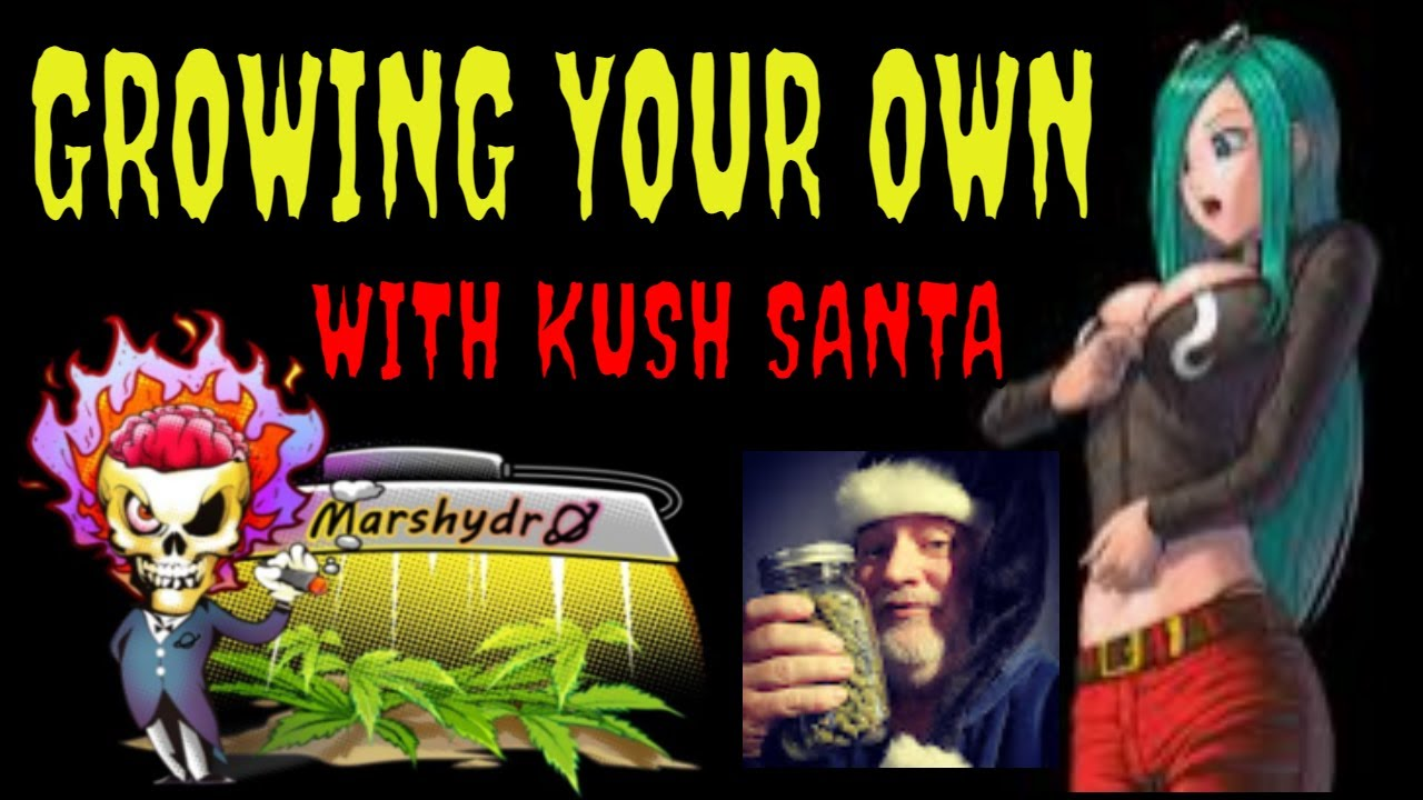 Download MARSHYDRO LED'S & TENT'S 9 DIFFERENT STRAINS OF MARIJUANA. ALL IN 1 PLACE