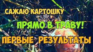 Посадка картофеля НЕ КОПАЯ! ПОЗОР на весь Калининград!