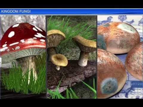 CBSE Class 11 Biology, Biological Classification – 4, kingdom Fungi