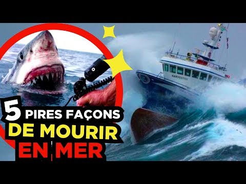 5 DANGERS TERRIFIANTS en MER 🐬