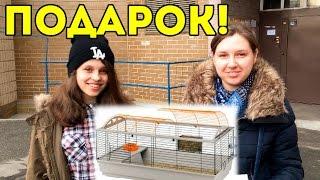 SvinkiShow Подарили Клетку Подписчице / Подарок от Блогера
