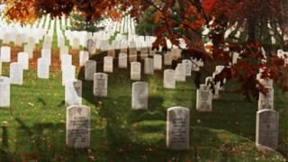 Veterans Day Video