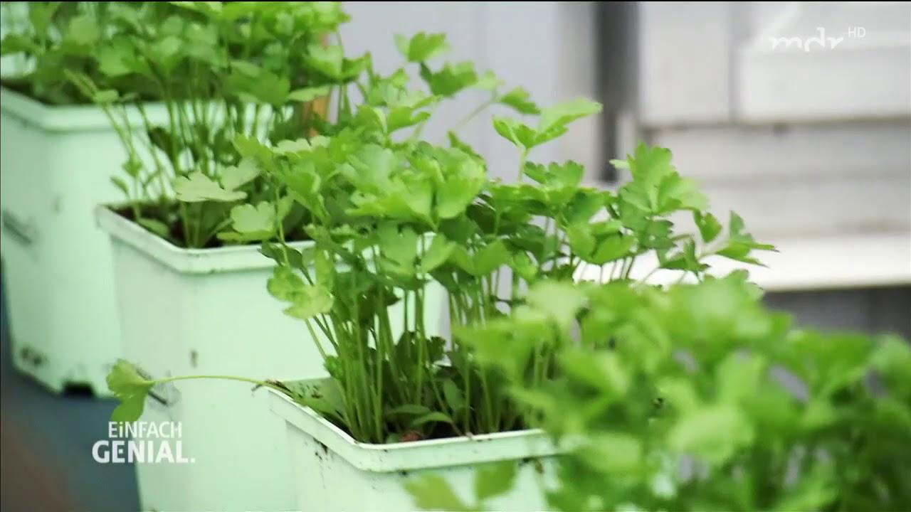 Greenbar Küchengarten - Frisches aus der Kräuterbox MDR DE - YouTube