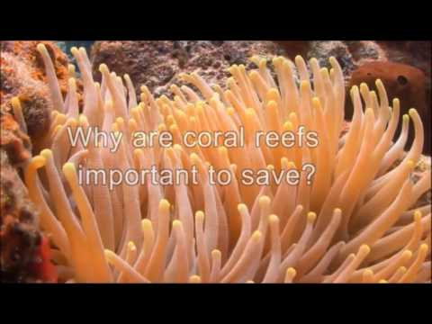 What are coral reefs? human impacts on them.