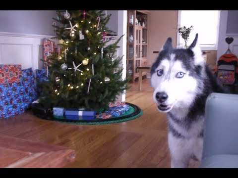 Mishka sings 'Jingle Bells' for Christmas