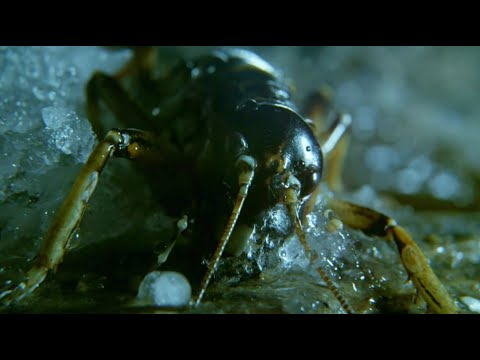 Insect Returns From The Dead | Wild New Zealand | BBC Earth