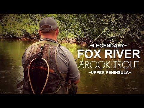Fox River Brook Trout In Michigan's Upper Peninsula