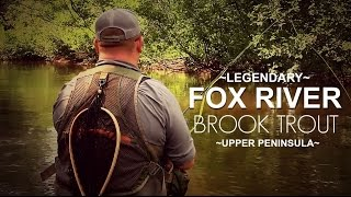 Fox River Brook Trout in Michigan