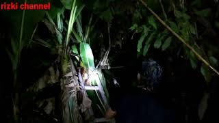 Download Video Cari burung di malam hari part 2 MP3 3GP MP4