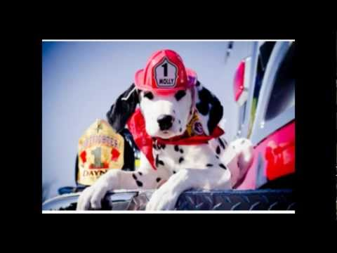 Skype FREE with the Fire Safety Dogs!