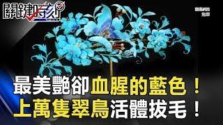 最美艷卻血腥的藍色!上萬隻翠鳥「活體拔毛」才能製成一件首飾! 關鍵時刻 20180702-2 劉燦榮 馬西屏