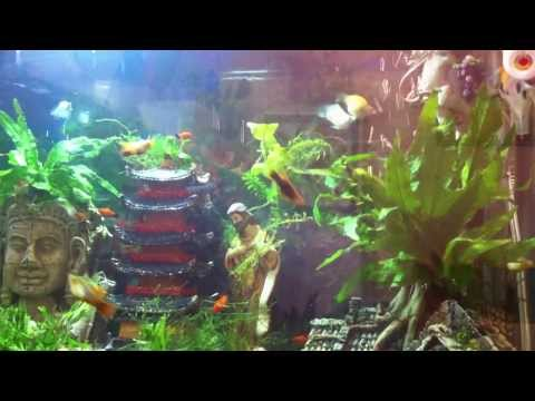 the-platy,-molly,-angelfish-and-pleco-of-faith-妈妈-罗伯蒂尼配唱