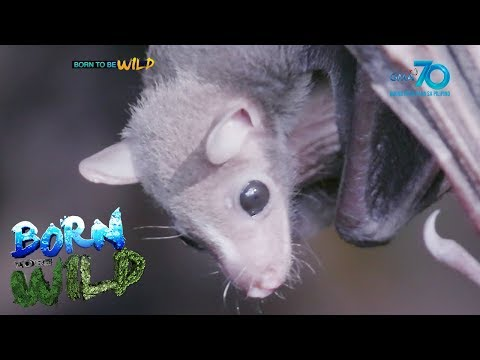 Born To Be Wild: Bats Vs. Crows