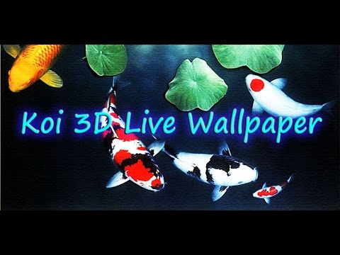 Koi 3d Live Wallpaper Youtube