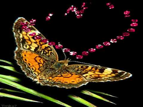 Mariposas Bonitas Youtube