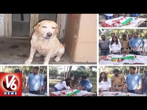 26/11 Mumbai Attacks Hero Dog Named 'Caesar' Passes Away | V6 News