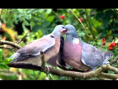 Из Омской области пытались вывезти краснокнижных птиц