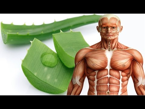see-what-aloe-vera-can-do-to-your-body