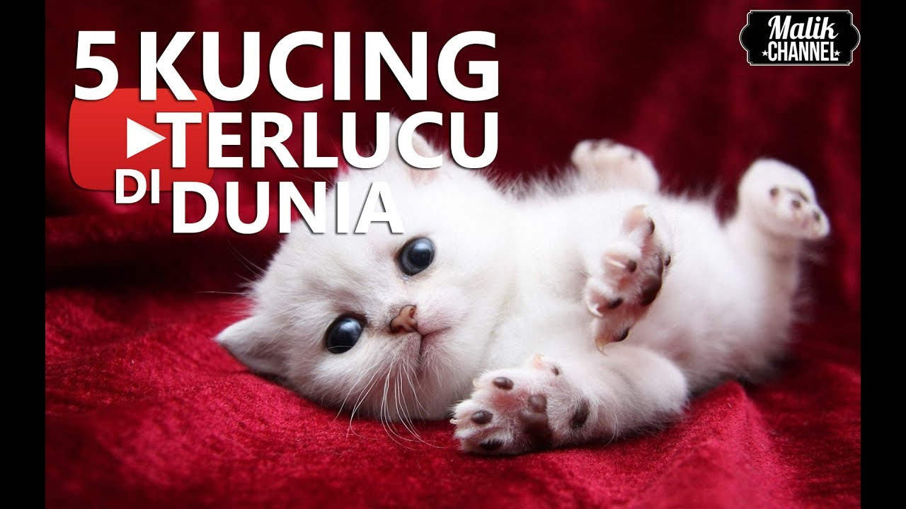 Download 97+  Gambar Kucing Ter Imut Paling Imut Gratis